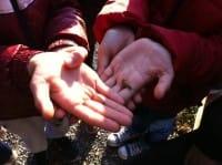 Nelle scuole i bambini imparano a coltivare l'orto