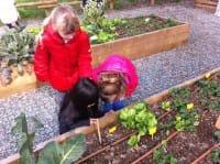 Bambini che coltivano l'orto