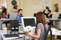 Portare animali domestici in ufficio: una marcia in più per dipendenti e azienda?