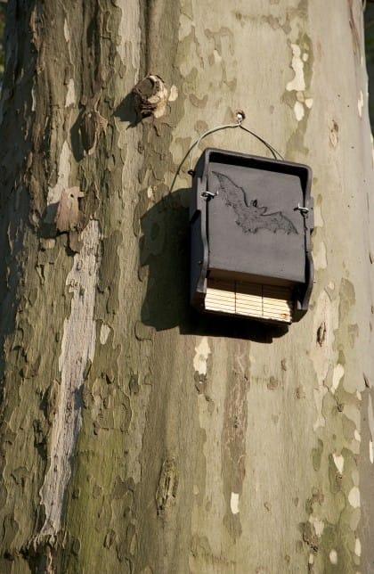 Installare una bat box contro le zanzare