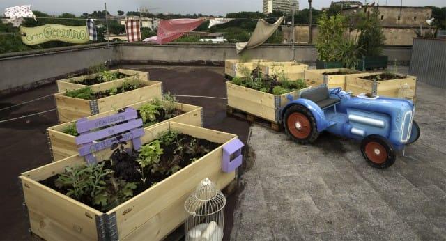 Come coltivare orto sul balcone senza alcuna esperienza for Coltivare sul balcone