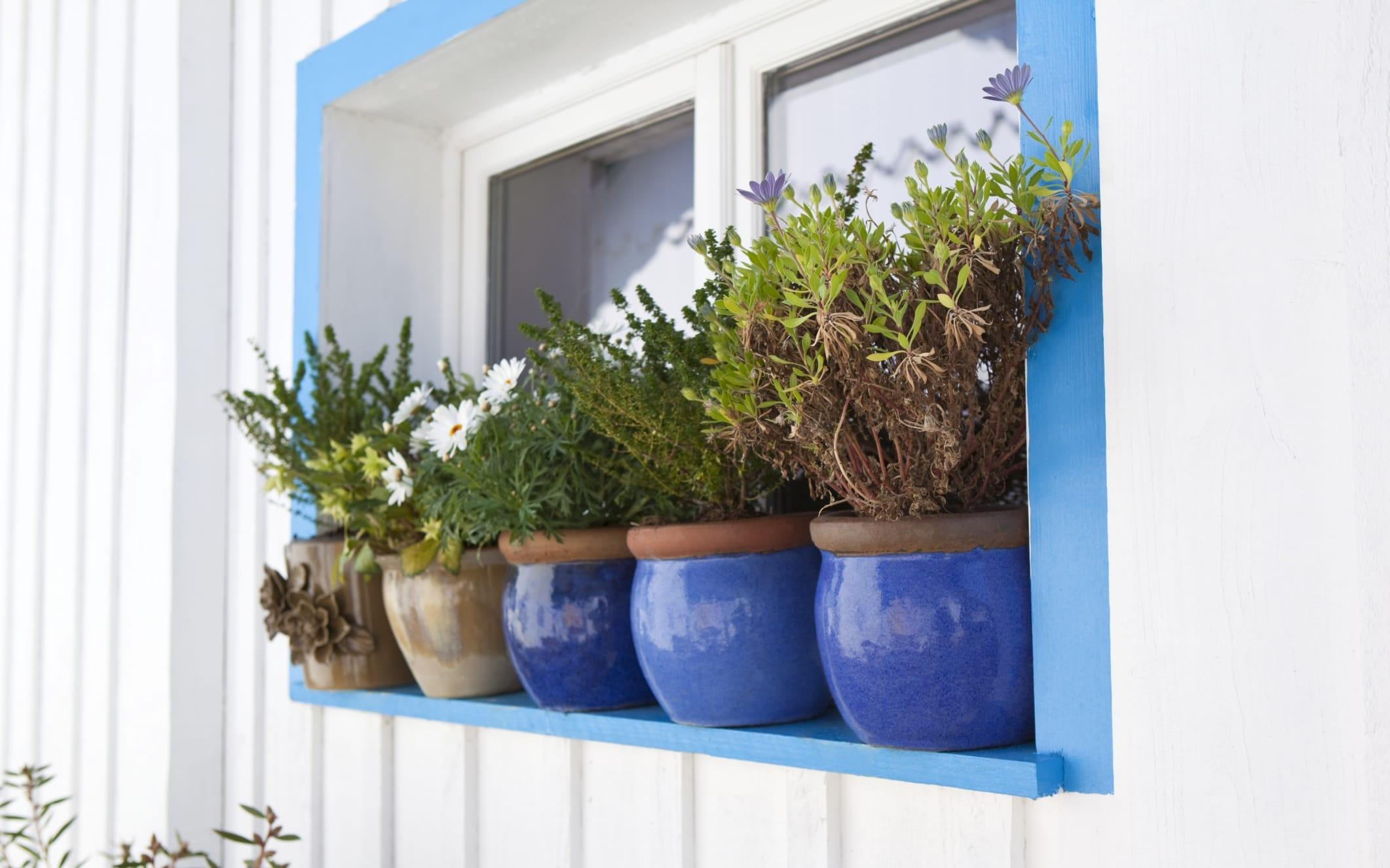 Come curare le piante durante le vacanze non sprecare for Curare le piante