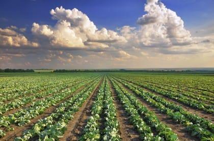 Ritorno dei giovani alla terra: 5.500 ettari di terreni in affitto o vendita