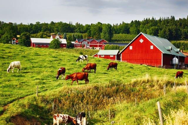 fattoria sostenibile una cooperativa calabrese che non