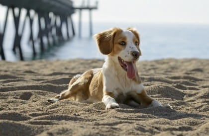 Baubeach Maccarese: il 20 settembre, la Notte Bianca, con tanti eventi per cani e padroni