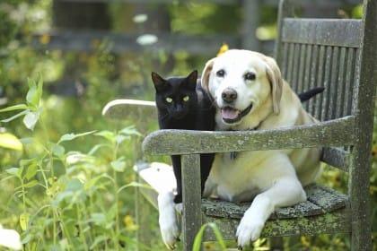 Elisir di lunga vita: cani e gatti ci fanno vivere più a lungo