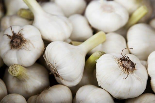 Come coltivare l'aglio in vaso sul balcone: le indicazioni e i consigli utili