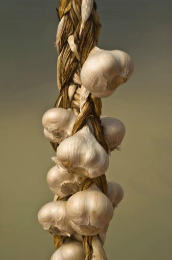 Come coltivare aglio in vaso: le indicazioni utili