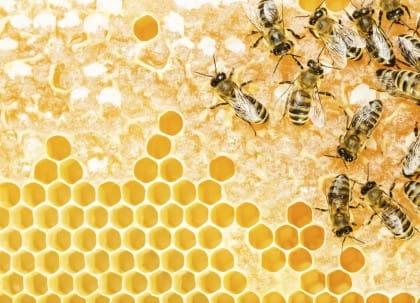Estinzione api Cina: le drammatiche conseguenze e i danni ambientali ed economici