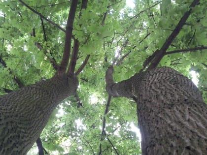 Elenco alberi: ecco quanto vale, in termini antismog, ciascuna specie. E quanti soldi ci fanno risparmiare