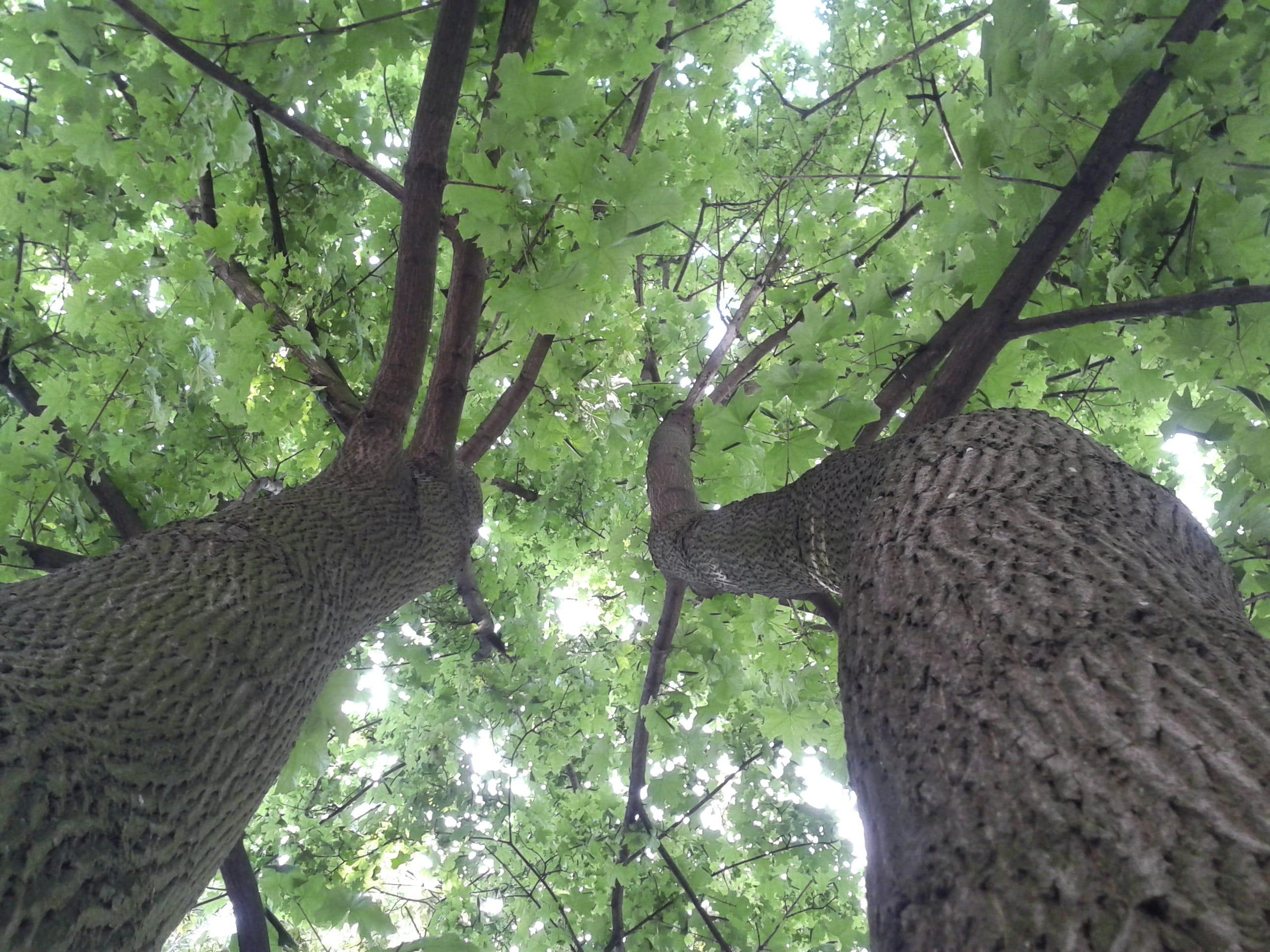 Importanza degli alberi in città