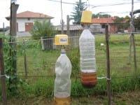 Insetti e lumache nell'orto: la trappola migliore, senza prodotti chimici