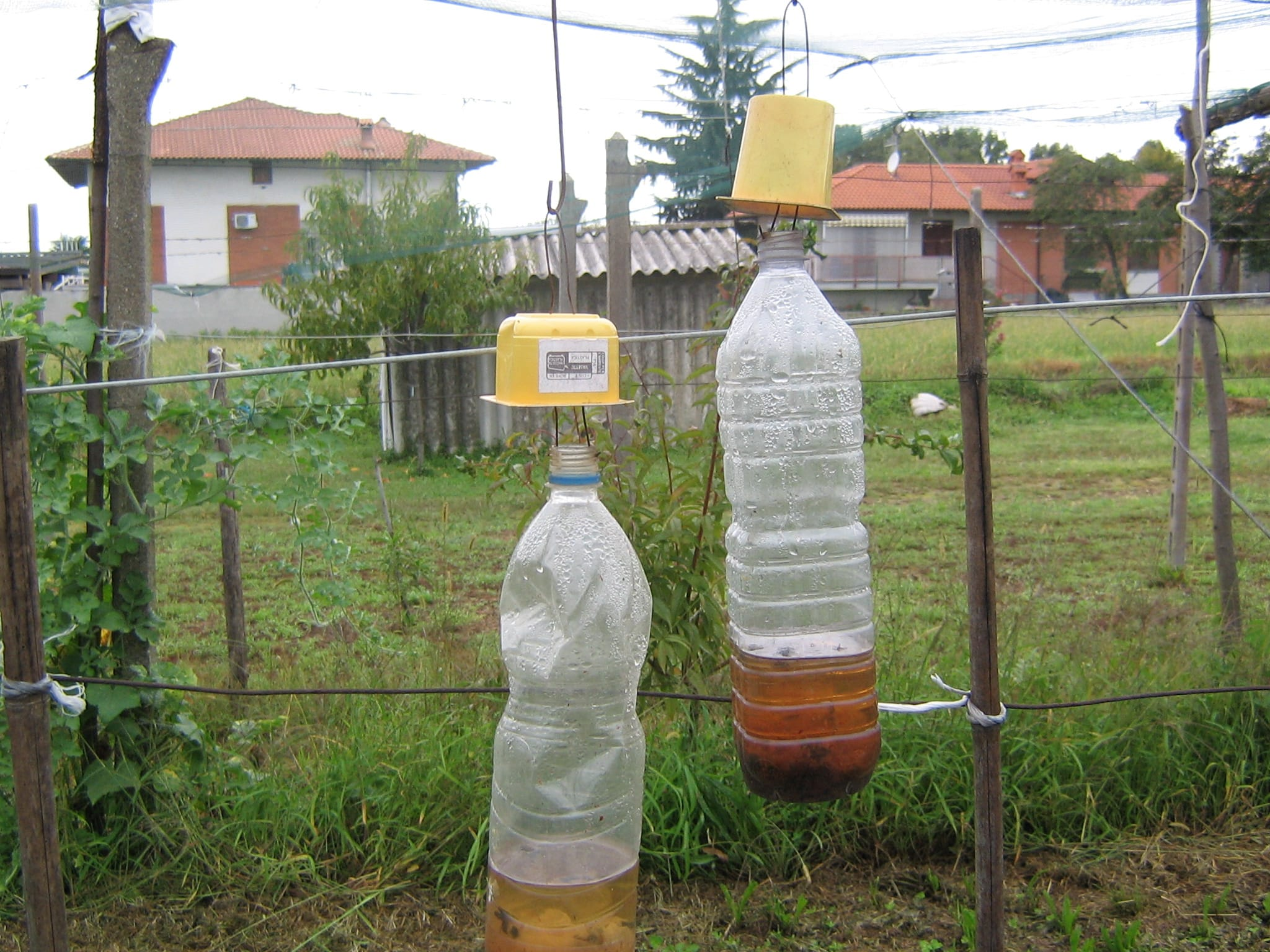 Trappola per insetti con bottiglia: come realizzarla in casa