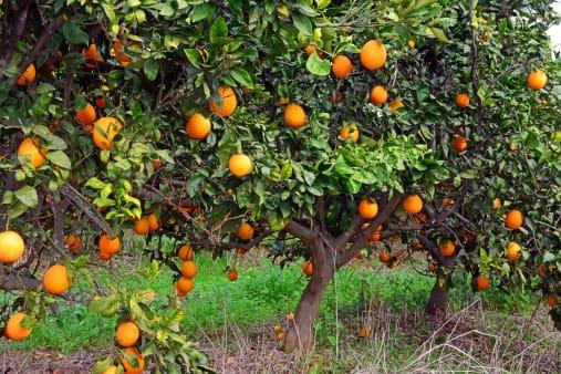 Come adottare un albero da frutta online non sprecare - Alberi frutto giardino ...