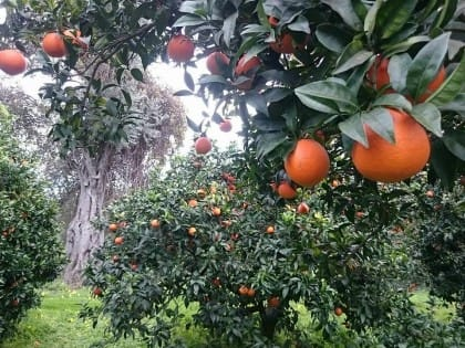 Biorfarm, l'iniziativa per adottare un albero da frutta online e riceverne a casa i frutti