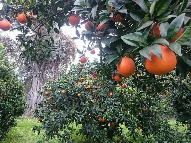 Come adottare un albero da frutta online non sprecare for Frutta online