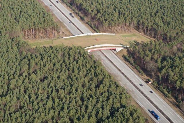 Wildlife bridges, i ponti per l'attraversamento degli animali selvatici lungo le autostrade