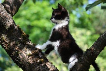 Small cute kitten climbing the tree