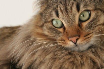 cibo-per-gatti-fai-da-te-sano-e-low-cost (5)