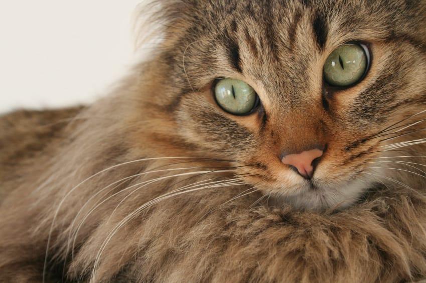 Cibo per gatti fatto in casa non sprecare for Te lo regalo se vieni a prenderlo sito