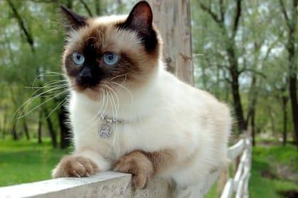 cibo-per-gatti-fai-da-te-sano-e-low-cost (6)