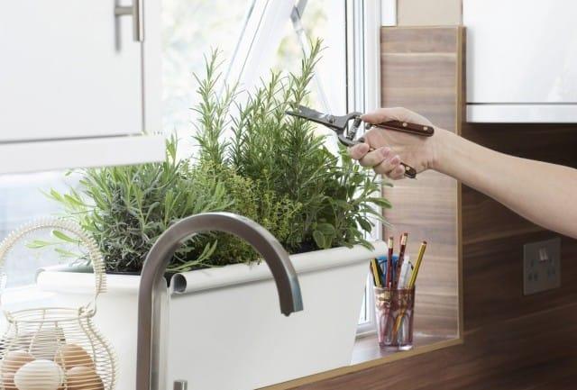 Come coltivare il rosmarino in casa, in vaso e sul balcone. Scegliete un terreno in pieno sole