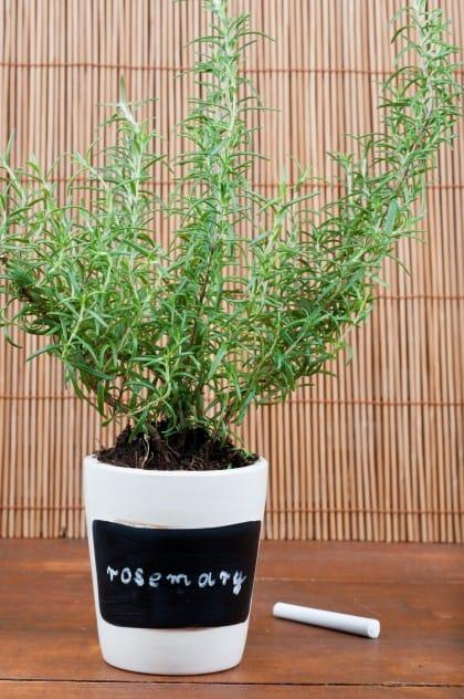 Rosmarino: come coltivarlo in casa, in vaso e sul bacone