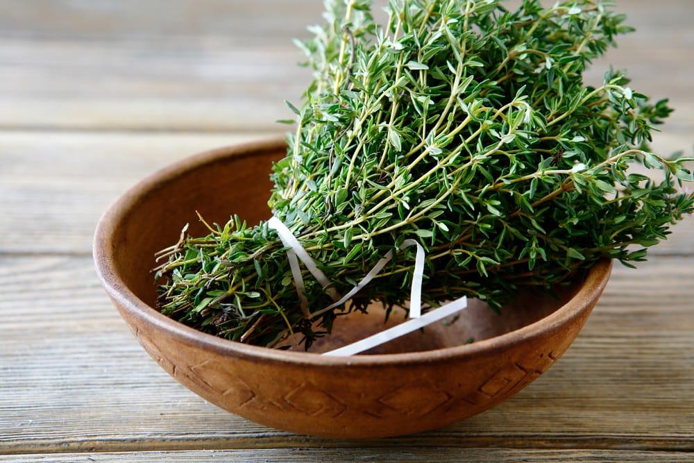 Come coltivare il timo non sprecare - Come coltivare il basilico in casa ...