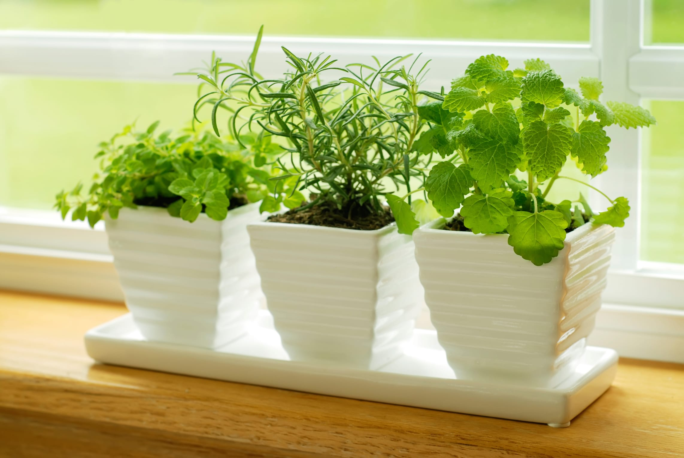 Piante aromatiche da coltivare in casa - Non sprecare