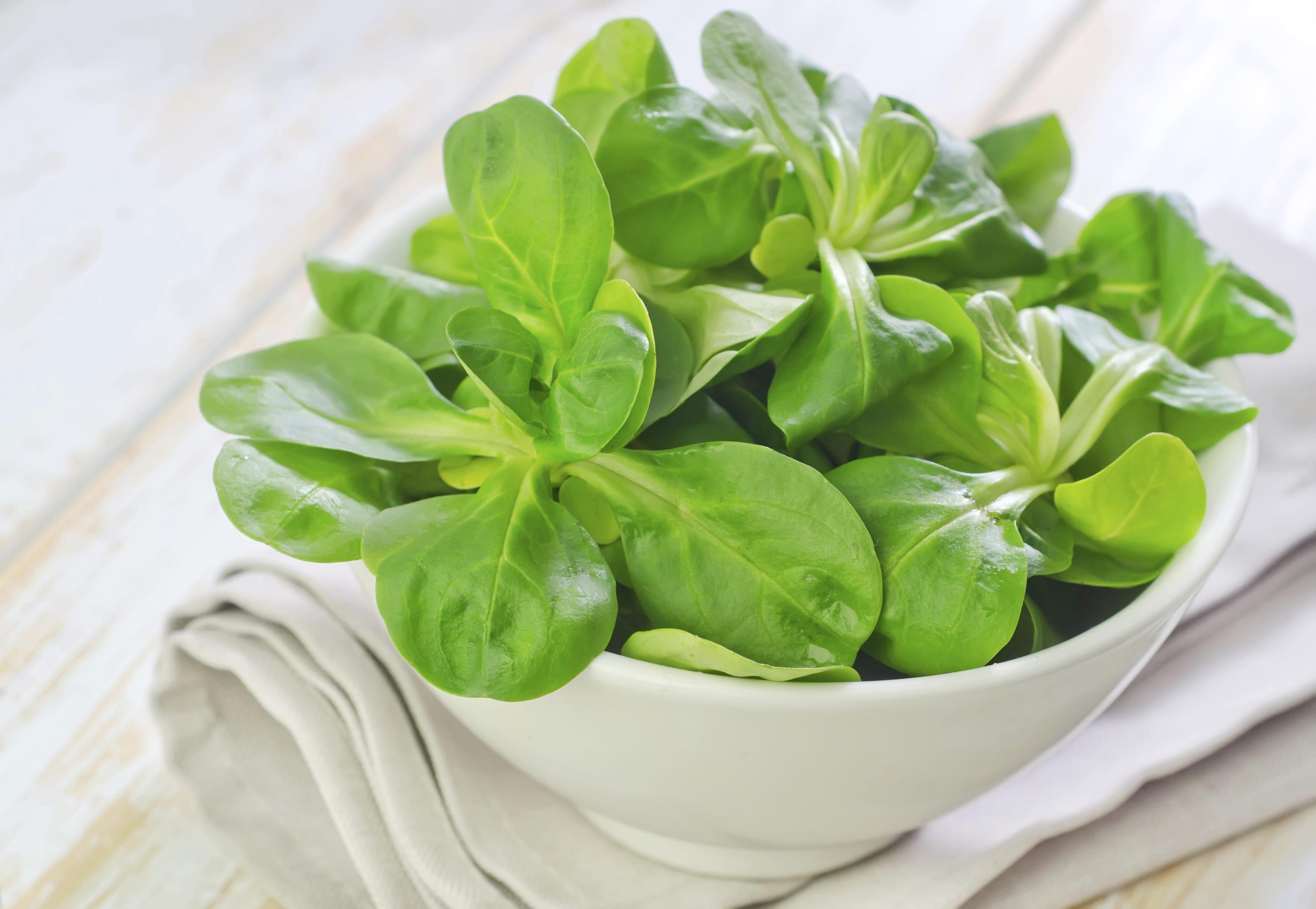 Come coltivare la valeriana in vaso o nell'orto