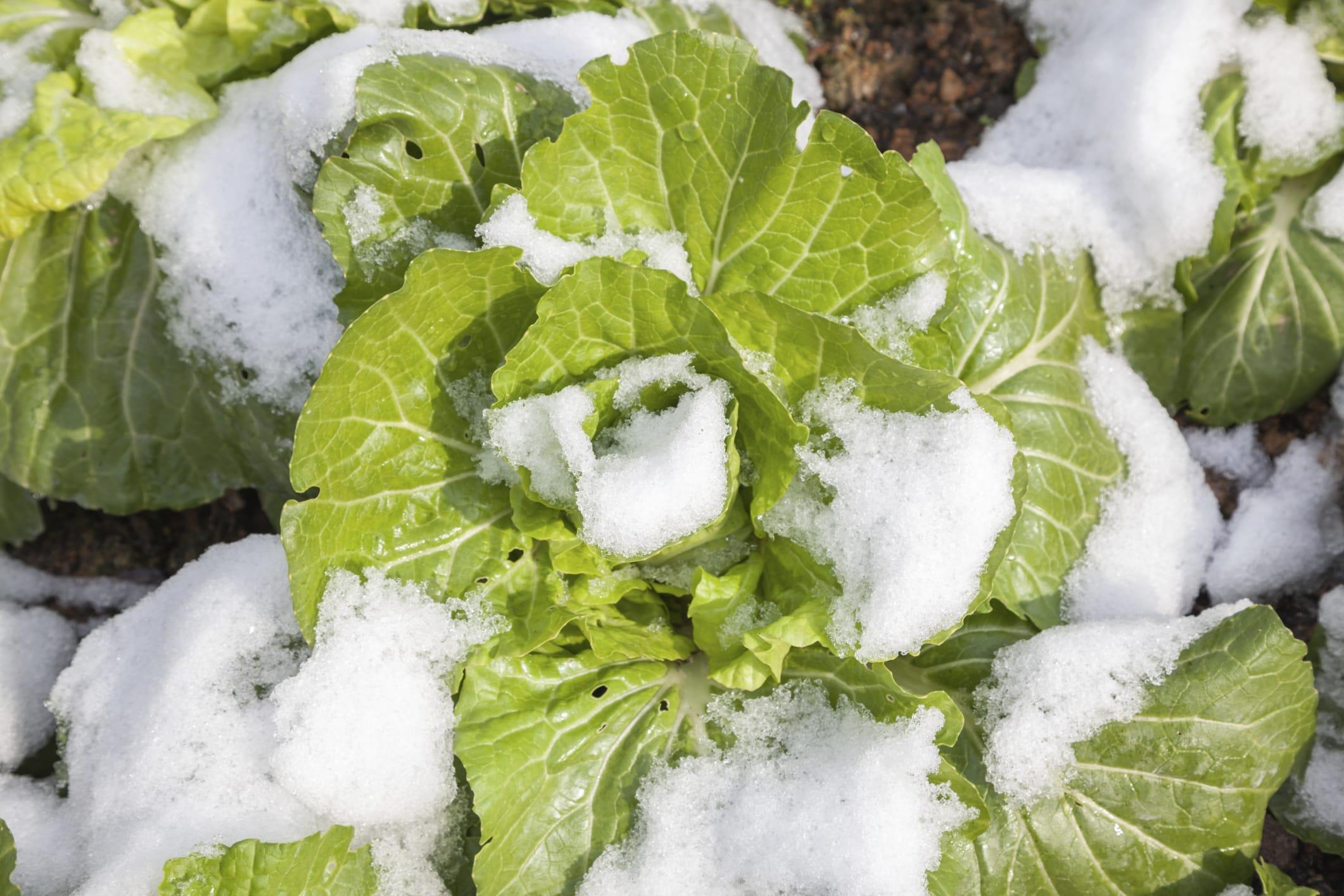 Cosa coltivare in inverno