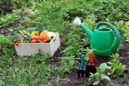 Orti urbani nel mondo: sono ogni giorno di più. A Berlino le verdure si coltivano in un aeroporto dismesso