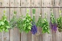 Piante aromatiche da coltivare in casa: ecco quali sono quelle indispensabili in cucina