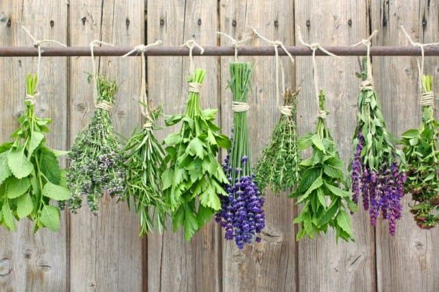 Piante Aromatiche Da Coltivare In Casa Non Sprecare