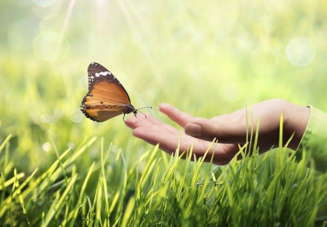 I comportamenti da evitare per salvaguardare salute, ambiente e animali selvatici