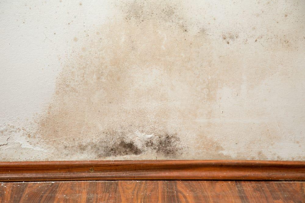 Rimedi naturali muffa muri non sprecare for Eliminare la muffa
