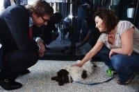 Cani in ufficio a Purina