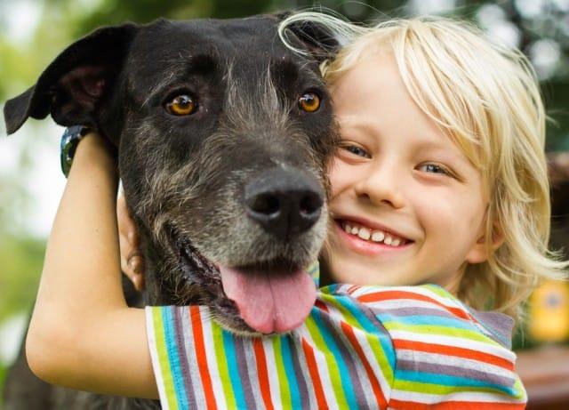 Come scegliere il cane giusto, 10 regole d'oro. Valutando spazi, stili di vita e tempo