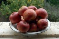 Ecco 10 proprietà della mela annurca: abbassa il colesterolo e rafforza i capelli