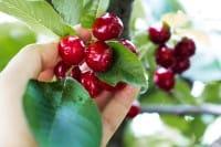 Frutta e verdura di stagione: cosa comprare a giugno