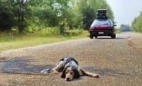 Animali abbandonati, uno scempio molto diffuso. Così possiamo aiutarli a non morire