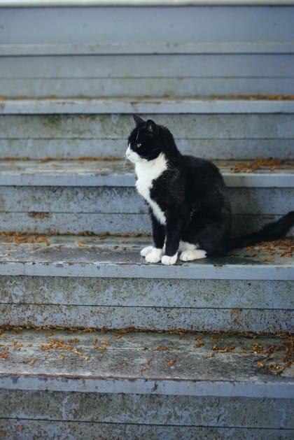 come-aiutare-animali-abbandonati (2)