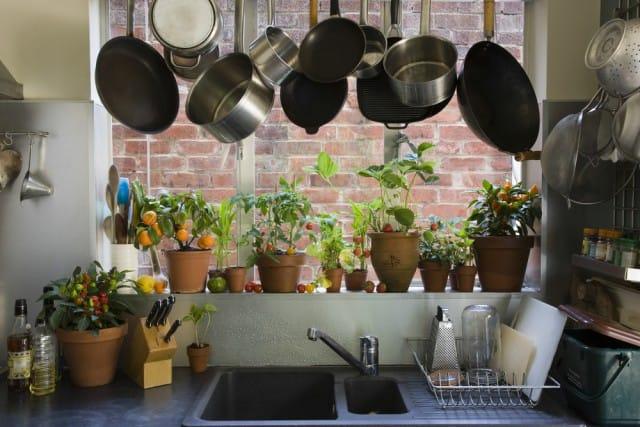 come arredare la casa con le piante - non sprecare - Arredare Casa Libri