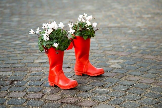 come-coltivare-ciclamino-vaso-giardino-guida-indicazioni-utili (6)