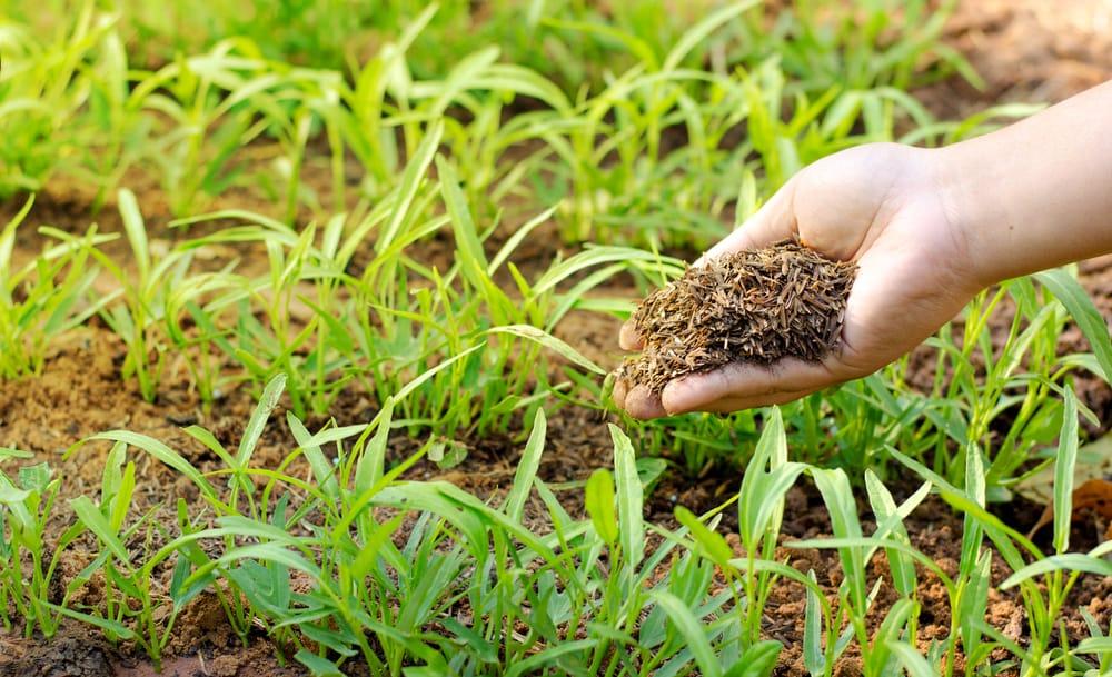 Compostaggio: i vantaggi e come realizzarlo in casa per rendere fertili giardino, orto e vasi
