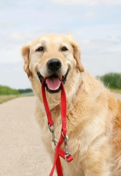 avvelenamento-cane-cosa-fare-sintomi-rimedi (1)