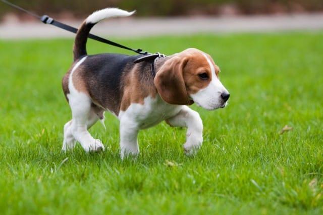 Cosa fare in caso di avvelenamento del cane non sprecare for Cani giocherelloni