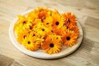 Benefici della Calendula: le proprietà curative di un rimedio naturale ideale d'estate