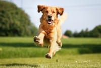 Mai dire bugie ai cani: capiscono se il padrone mente, e non gli credono più