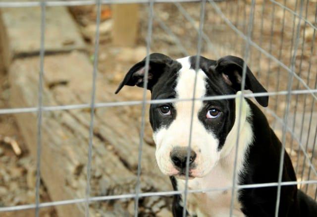 Maltrattamento degli animali: ecco cosa fare per aiutarli